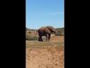 Слон пьёт воду Addo Elephant National Park