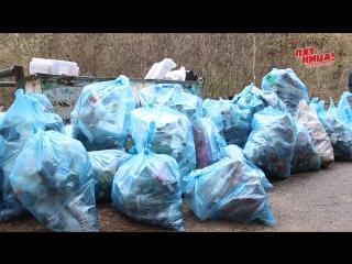Одни бросают, другие убирают. Из леса вынесли порядка трехсот мешков мусора