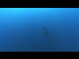 BBC Планета Земля 11. Глубины океанов - Planet Earth 11. Ocean Deep (2006)