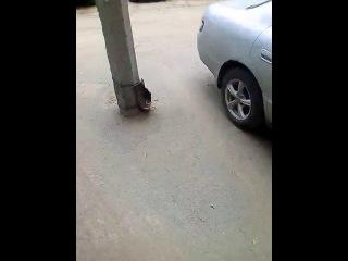 Мужчина взял котят у б.Гали и пытался выбросить