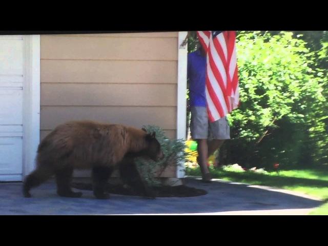 Медведь и человек испугались друг друга