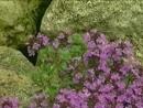 Цветники. Альпийская горка. Какие цветы можно выращивать. Красивый сад