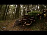 Трискелион. Природа Бретани Triskell. Bretagne Sauvage (2015)
