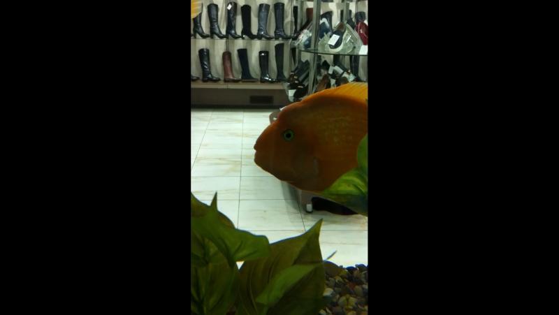 Рыбка в шоке🎄🎄😻😻