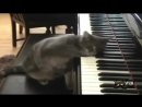Самые смешные видео про котов