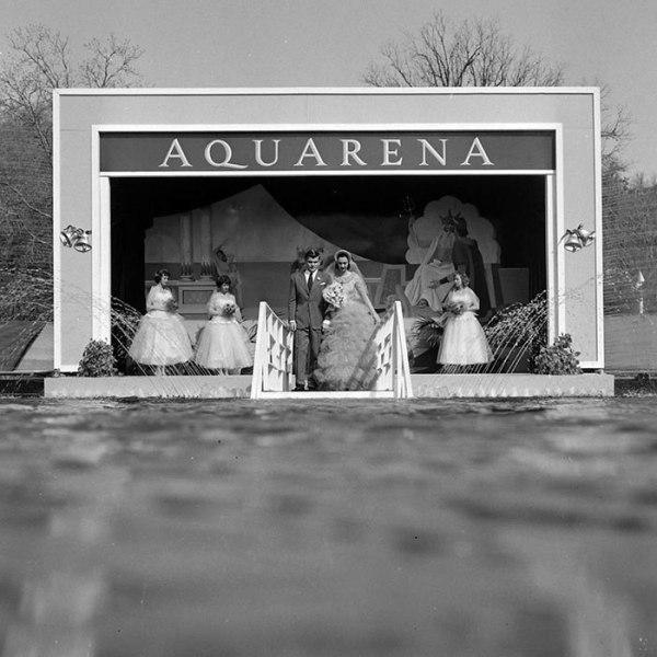 NO5byBkd02w - Первая свадьба под водой: как давно это было (10 фото)