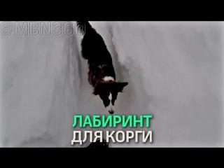 Канадец вырыл снежный лабиринт для собаки