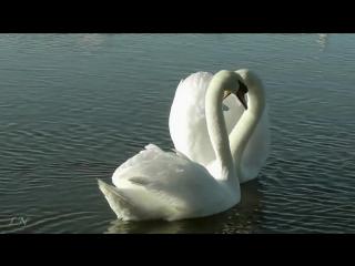 Весна. Ф. Лист - Утешение - Ferenc Liszt