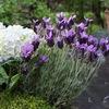 Мастерская флористики Первые цветы