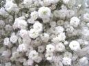 Удачный сезон Ампельные цветы герань петуния фуксия и другие