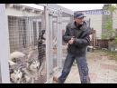 Антуан Наджарян: За поведение собак отвечает только человек