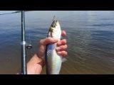 Рыбалка в Волгограде и окрестностях (о. Сарпинский)