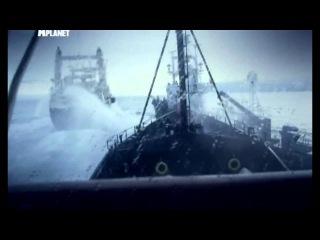Китовые Войны. Истребление китов злыми людьми.