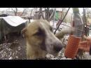 Собака Найда и большая кость