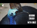 Cassowaries in Australia dangerous and endangered Serious Biology for Kids 2