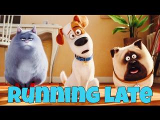 Фраза I'M RUNNING LATE из мультфильма The Secret Life of Pets