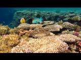 Видео релакс Подводный мир