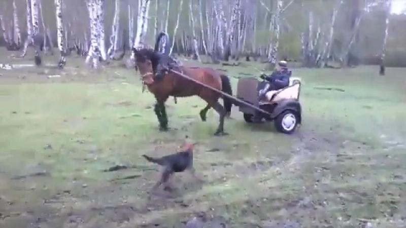 Дрифт на лошади по-татарски
