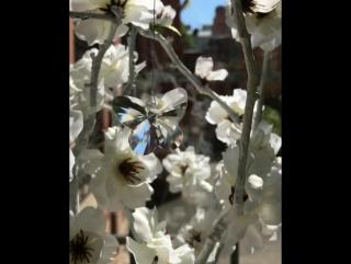 Лето ☀️Бабочки порхают в животе 🦋#weddingflowers #weddingdecor #floristiq #floristiq_com #weddingday #flowers #авторскиебукеты #