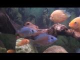 22.09.2014 наши аквариумы (2)