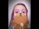 Это не борода это собака