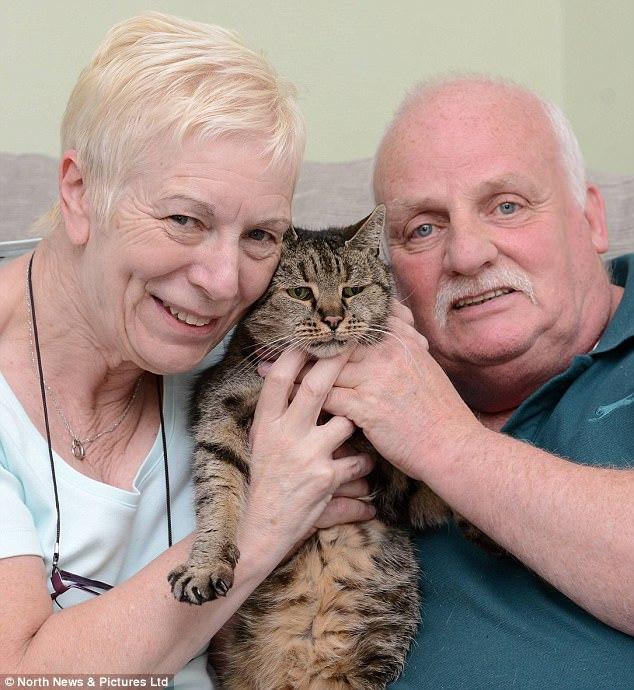 В Англии скончался самый старый кот вмире