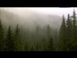 Если дерево упадет / If A Tree Falls. A Story Of The Earth Liberation Front (2011)