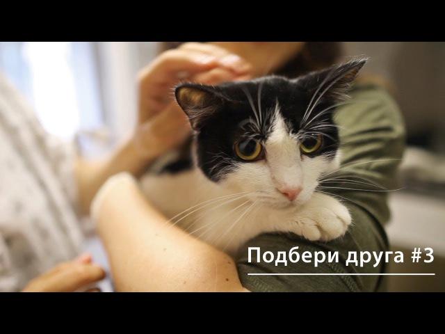 Благотворительный фонд помощи животным «Подбери друга» и Hill's меняют жизнь к луч...