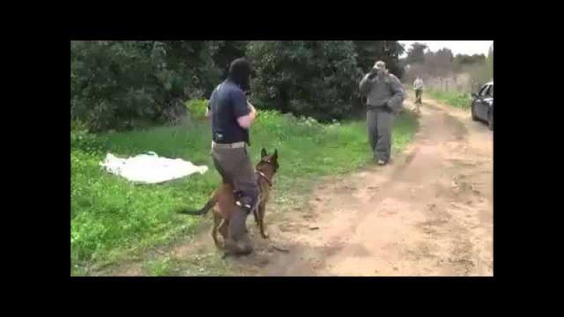 Anti-terrorism training Israel
