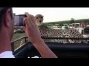 Turistlere Poz Verip Fotoğraf Çekilen Çita Dailymotion Video