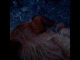 xenia_cherry video
