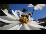 Исчезновение пчел - документальный фильм