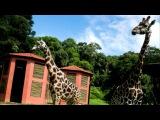 куритиба зоопарк - ПаранаБразилия