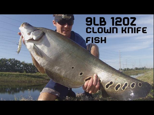 9lb 12oz Giant Clown Knife Fish Canal Bass Fishing Florida Day 3