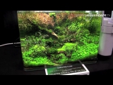 The Art of the Planted Aquarium 2015 - Scapers Tank (Nano) category, part 8