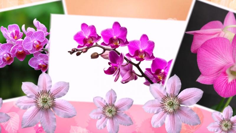Любовь Кутузова - Этот прекрасный цветок орхидея!