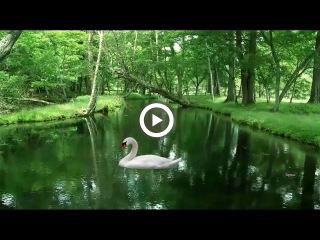 ♫ Эдвард Григ-Утро в лесу ~ Edward Grieg - Morning in the Forest