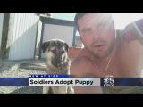 Soldiers Adopt Puppy In Iraq, Bring Him Home To California