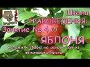 Школа ТРАВОВЕДЕНИЯ Занятие №4 7 ЯБЛОНЯ купажи и сборы на основе чая из яблоневого листа