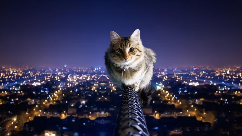 Кот по кличьки Дизель и его игрушка