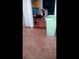 Собака, которая кошка