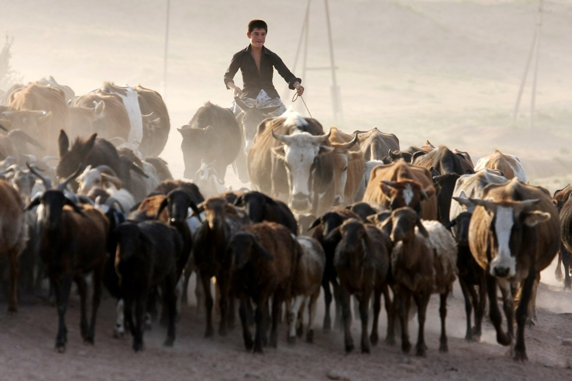 АБР выделил Таджикистану полмиллиона долларов на разработку проекта по улучшению молочной промышленности