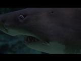 Добрейшие существа - акулы!