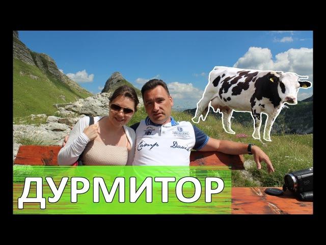 Дурмитор Овцы коровы и СНЕГ летом Живописная дорога в Плужине Орлиная дорога