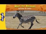 Meet the Animals 30 Zebra  Level 2  By Little Fox