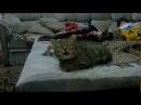 кот устал чихать