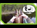 Отличный клёв Ловля щуки на самоловки и спиннинг на разливе двух рек Сплав Остров