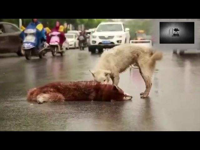 Собаки тоже плачут Берегите животных ведь они тоже дышат и живут