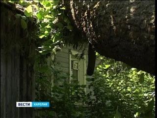 Аварийное дерево свалилось на крышу дома №10 по ул.Пушкинской в Олонце