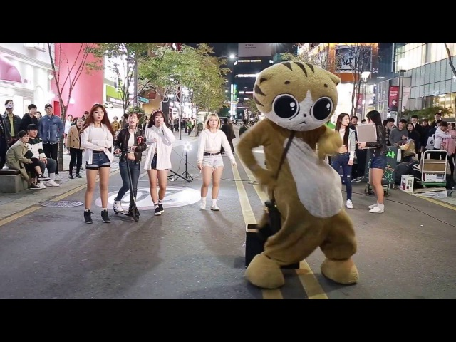 JHKTV 신촌명물고양이댄스 sin chon special cat k pop dance dance